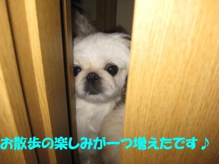 05_convert_20100915092504.jpg