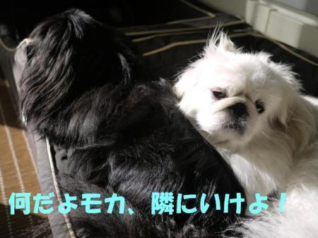 05_convert_20100919103041.jpg