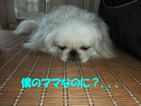 06_convert_20100906083510.jpg