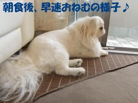 06_convert_20100909095555.jpg