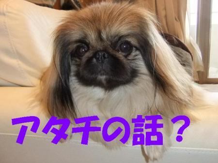 08_convert_20100507074947.jpg