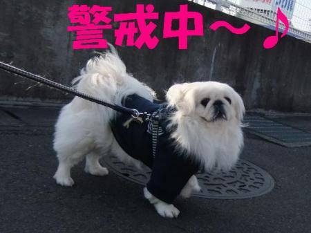 隴ヲ謌剃クュ_convert_20100223075618