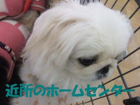 ・ィ・」_convert_20100308084505