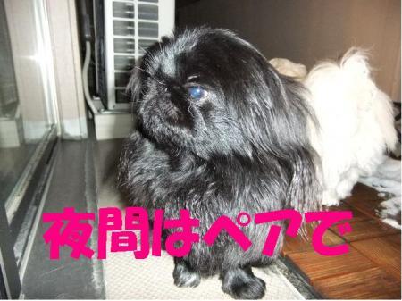 螟憺俣_convert_20100312082933