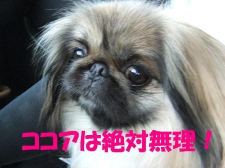 繧ウ繧ウ繧「_convert_20100324081017