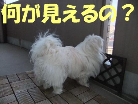 縺ェ縺ォ縺契convert_20100331075323