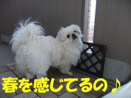 縺ッ繧祇convert_20100331075345