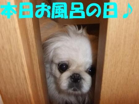 縺企「ィ蜻・convert_20100406094213