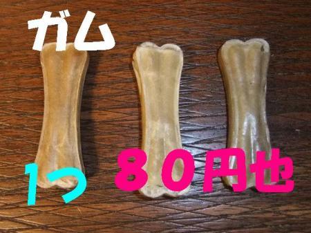 gamu_convert_20100225081905.jpg