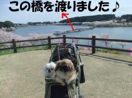 hasi_convert_20100502092937.jpg