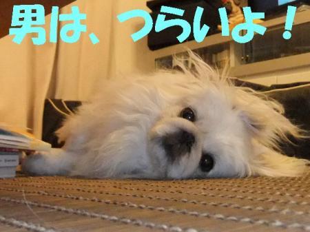 mi005_convert_20100409093523.jpg