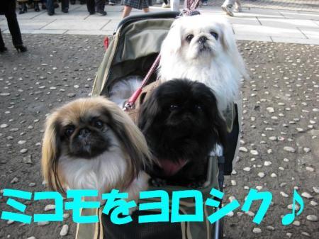 mikomo_convert_20100429112447.jpg