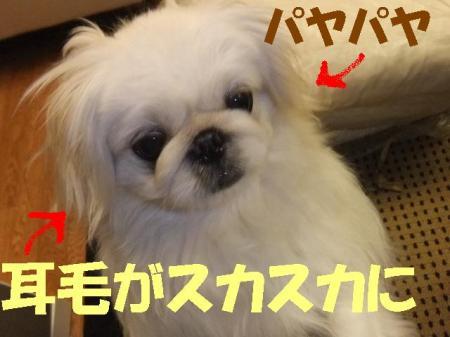 mir003_convert_20100409093601.jpg