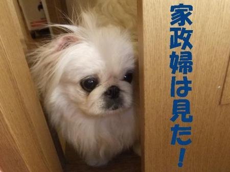 miru_convert_20100305080733.jpg