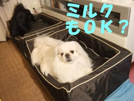miruku_convert_20100306075749.jpg