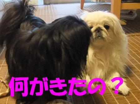 moka_convert_20100331075159.jpg