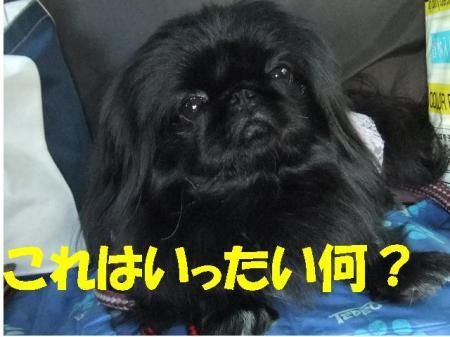 nani_convert_20100324123942.jpg