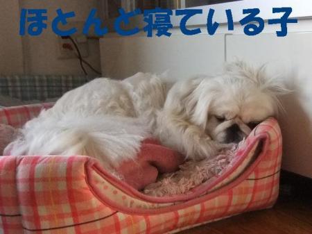 neteiruko_convert_20100303080248.jpg