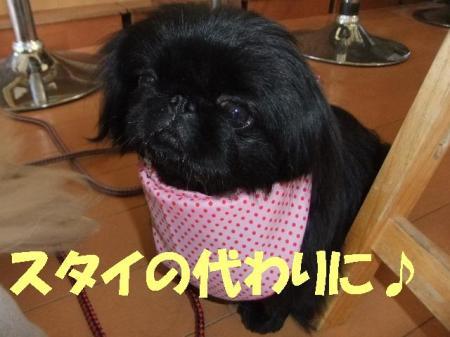 sutai_convert_20100412075459.jpg