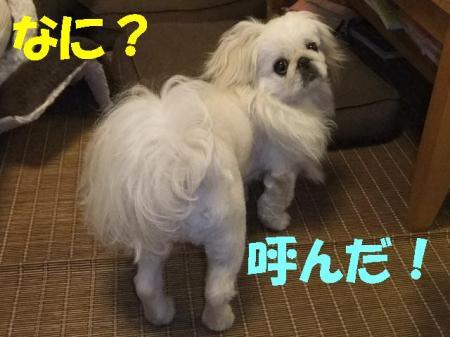 yobu_convert_20100427085625.jpg