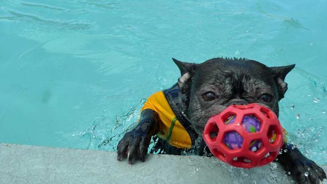 fetch!  (8)