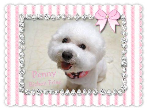 penny07 09