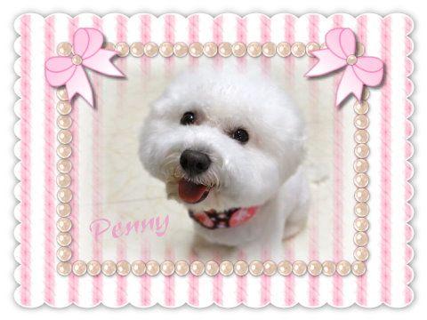 penny07 08