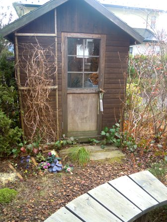 my-garden 079