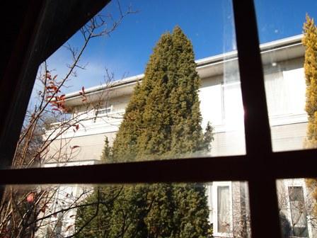 my-garden 070 (2)