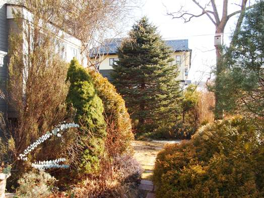 my-garden 104