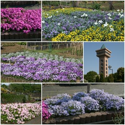 公園の花S