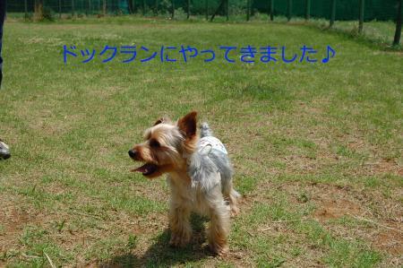 20110504ペロ3_convert_20110504145930