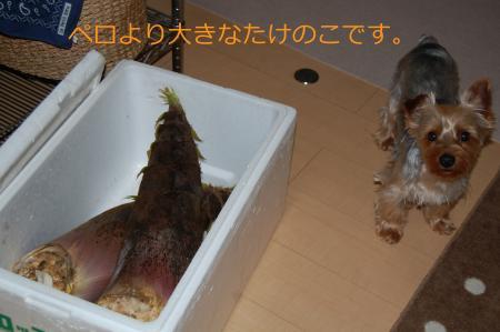 20110505ペロ2_convert_20110505150757