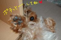20110602ペロぽちっと_convert_20110602113948
