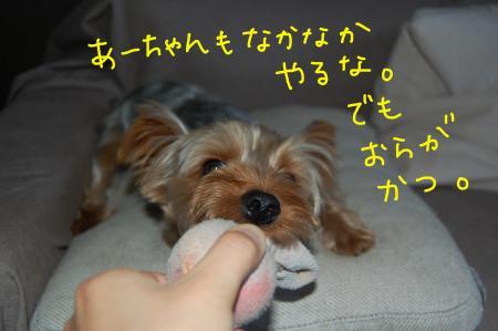 20110628_convert_20110628214749.jpg