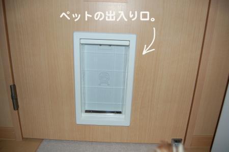 20110707ペロ1_convert_20110707125238