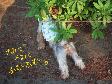 2011430_convert_20110430100546.jpg