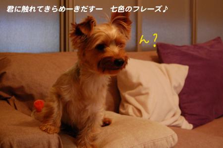 DSC_0446_convert_20110712213829.jpg