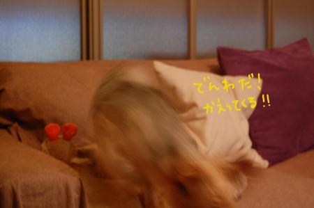 DSC_0447_convert_20110712213812.jpg