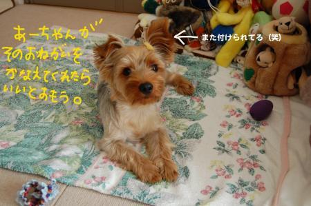 DSC_0449_convert_20110710001409.jpg