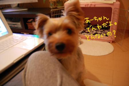DSC_0449_convert_20110712213730.jpg