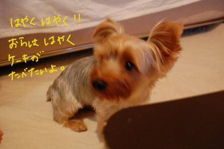 DSC_0466_convert_20110717102940.jpg
