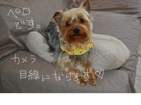 snap_peroxtuchi_2011430351.jpg