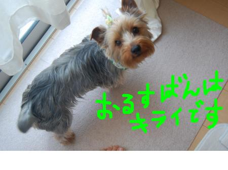 snap_peroxtuchi_201144183049.jpg