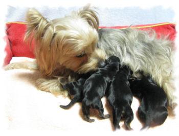 ちまき出産2
