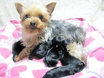 ケイコ出産