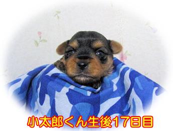 小太郎ちゃん3