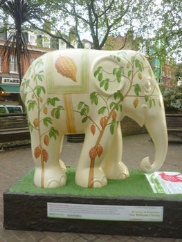 254,Cocoa the elephant (2)