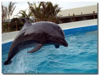 イルカのフジ