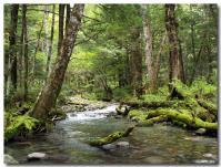森林浴-1-